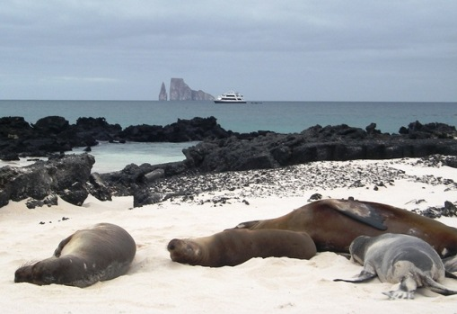Wildlife Up Close in the Galápagos: An Eco-Cruise to Exotic Island Animals
